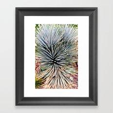 Arizona Desert Botanical Gardens Framed Art Print