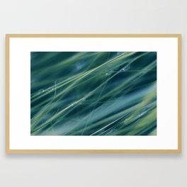 Kentucky Blue grass Framed Art Print