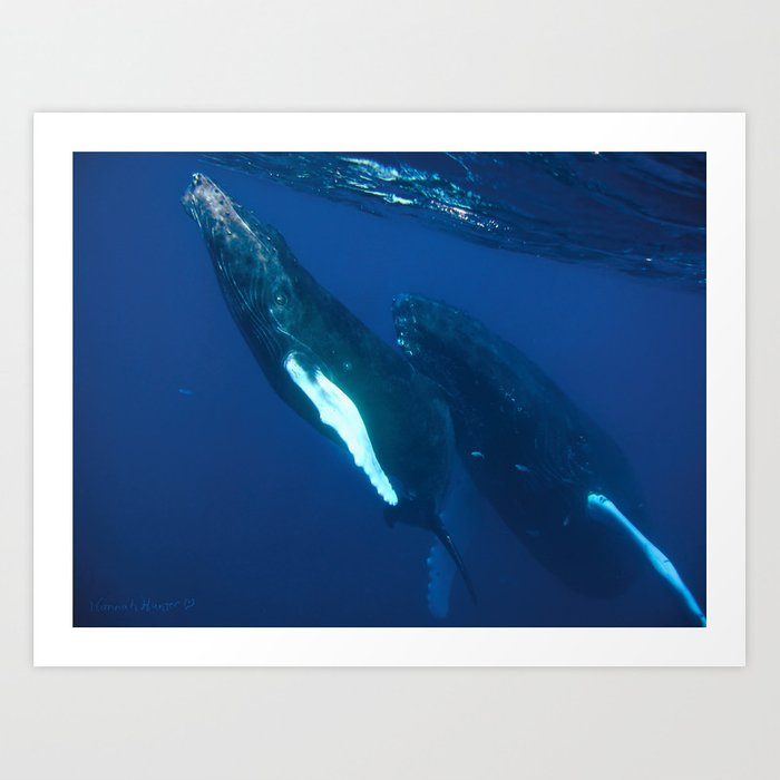 Humpback Whale and her Calf coming up for air Art Print