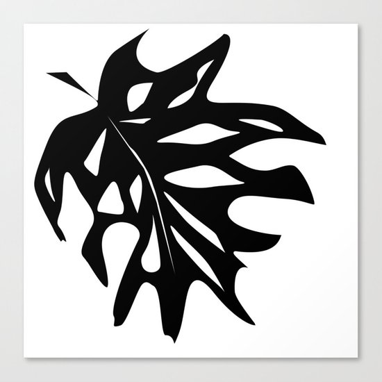Black leaf monstera on white background . Canvas Print