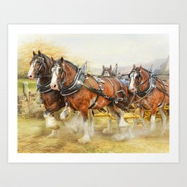 Clydesdales In Harness Art Print
