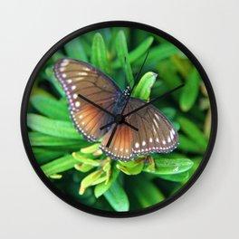Malayan Eggfly Wall Clock