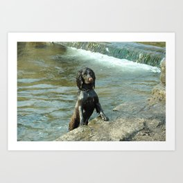 Puppy in the water  Art Print