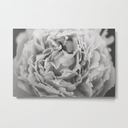 Petals of a Peony in Black and White Metal Print