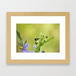 bee lover photography Framed Art Print