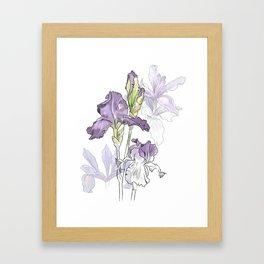 Iris - Flower botanical illustration Framed Art Print