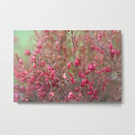 Blooming shrub hot pink flowers Metal Print