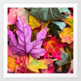 Autumn Photography - Colorful Leaves Art Print