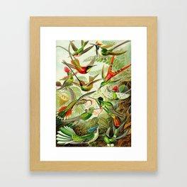 Kunstformen der Natur (Art Forms in Nature)a book of lithographic and halftones. Hummingbirds Framed Art Print