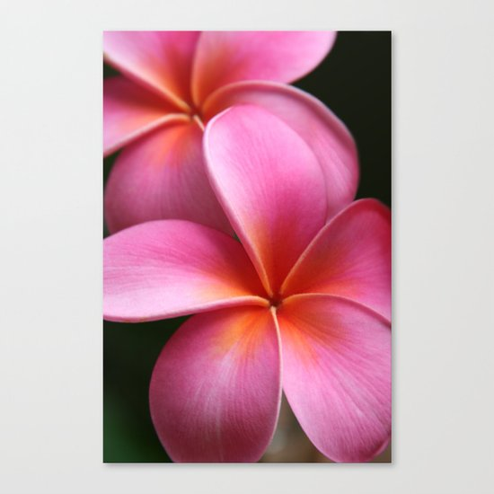 Pua Lei Aloha Cherished Blossom Pink Tropical Plumeria Hina Ma Lai Lena O Hawaii Canvas Print