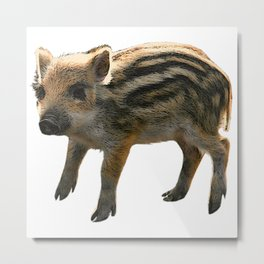 shoat, wild boar, baby animals Metal Print