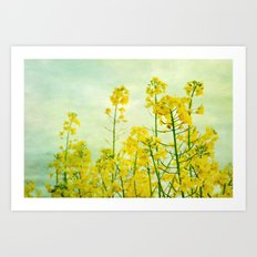 rape blossoms Art Print