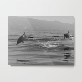 Black and white dolphin race in the ocean Metal Print