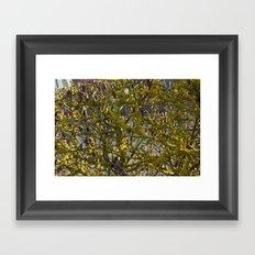 Moss in the Spring Framed Art Print