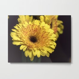 Yellow & Orange Gerbera Daisy Macro 1 Metal Print