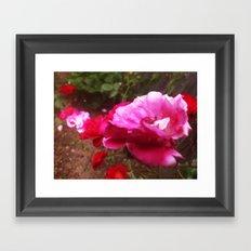 Roses Framed Art Print