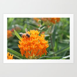 Orange on Orange  Art Print