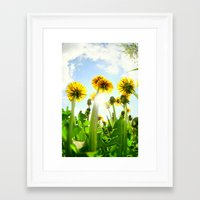 dandelion Framed Art Prints featuring Dandelion by Falko Follert Art-FF77