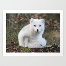 Polar Fox by Anne Elisabeth Art Print