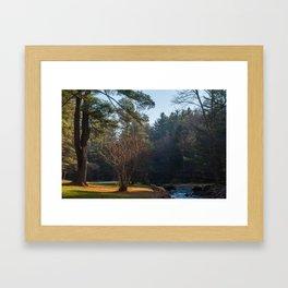Picnic Spot at Clear Creek #3 Framed Art Print