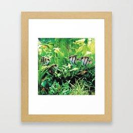 Teardrop Angelfish Framed Art Print