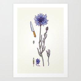 blue cornflower and knife Art Print