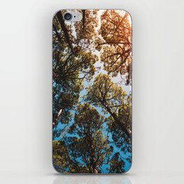 Trees and sky in sunlight- forest landscape - nature photography iPhone Skin