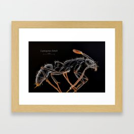 Leptogenys kitteli Framed Art Print