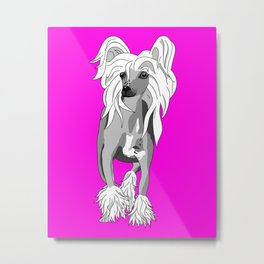 Sassy Chinese Crested Metal Print