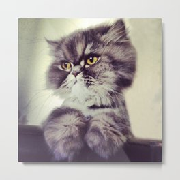 Persian Cat Metal Print