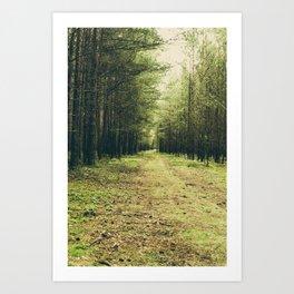 Forest Path... Art Print