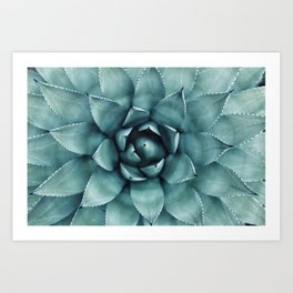 Aloe Green Agave Art Print