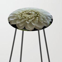 Dahlia Rhonda Flower Counter Stool