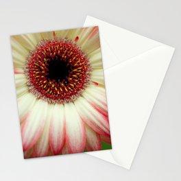 The Daisy Stationery Cards