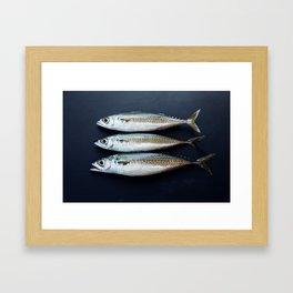Mackerels Framed Art Print