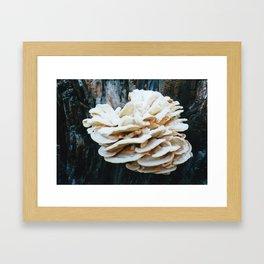 Rose like mushroom on old tree Framed Art Print