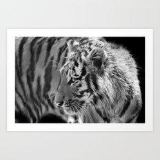 Tiger Cub 2 Art Print