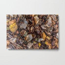Fallen autumnal leaves Metal Print
