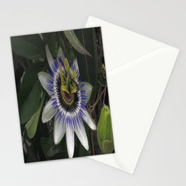 Delicate and Beautiful Passiflora Flower Stationery Cards