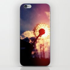 Dandelion in the Sun iPhone & iPod Skin