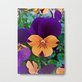 Pansy; Clear and Calm Metal Print