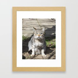 Cat pictures, cat eyes, pictures of the most beautiful cat eyes, cute cat, innocent cat pictures, cl Framed Art Print