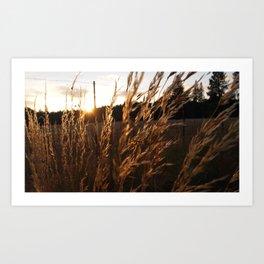 Wheat Stream Art Print