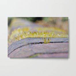 Nature in Miniature Metal Print