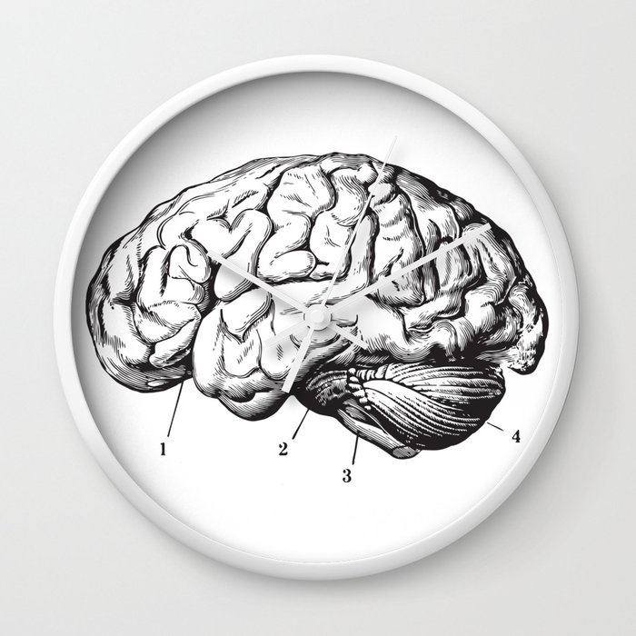 Human Brain Sideview Anatomy Detailed Illustration Wall Clock By