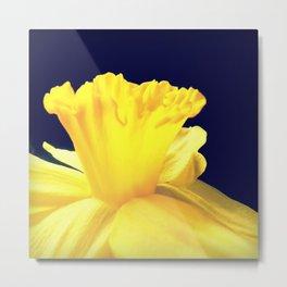 Daffodil Ruffles - iPhoneography Metal Print