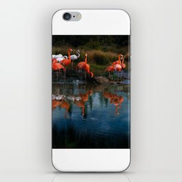 Flamingo Convention iPhone Skin