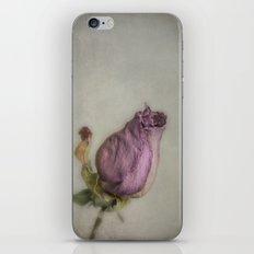 Single Dry Rose iPhone & iPod Skin