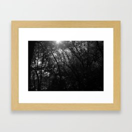 Tangled Up Tree Branches Framed Art Print