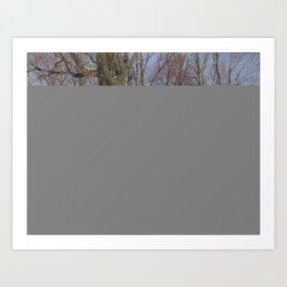 PARK AT WINTER TIME. SAINT PETERSBURG VIEW Art Print